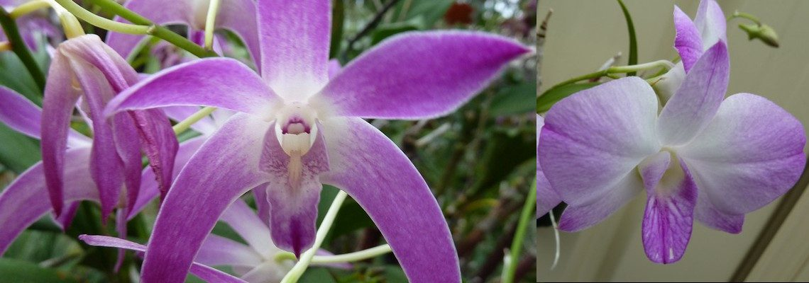 Demystifying Native Orchids Masterclass: Everything you need to know about Native Epiphytic Orchids
